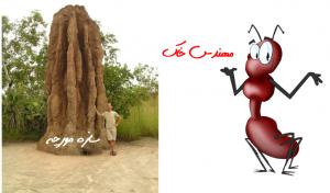 سازه مورچه